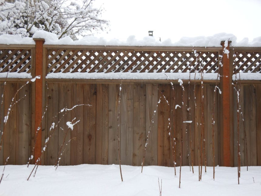 Fence Winter